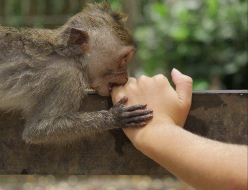 Il paradosso dello scimpanzé: e tu che rapporto hai con la tua scimmia interiore?