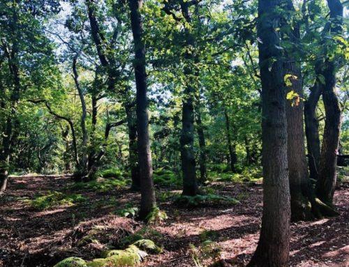 Il bosco che cura: gli effetti benefici della natura sulla nostra salute